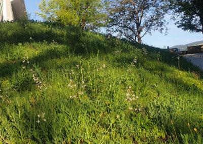 Prairie fleurie en développement